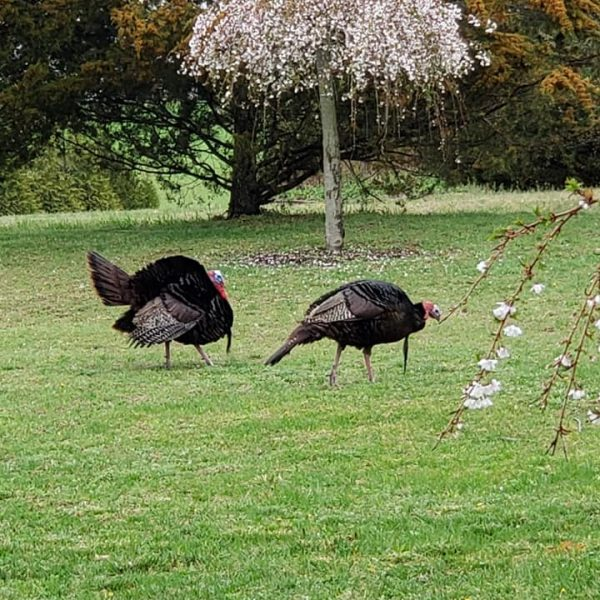 turkey visit 2019